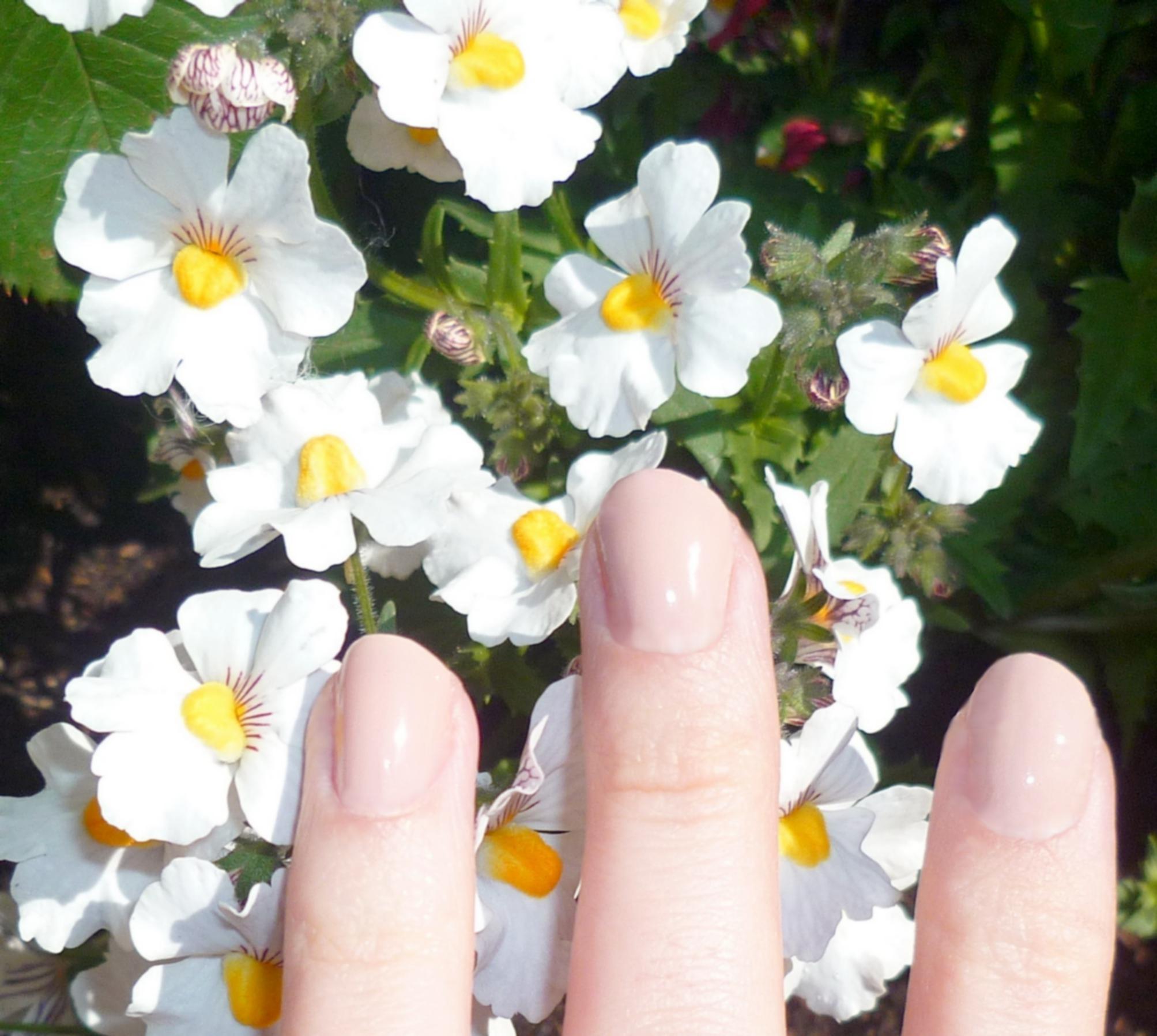 magnolia yves rocher (2)